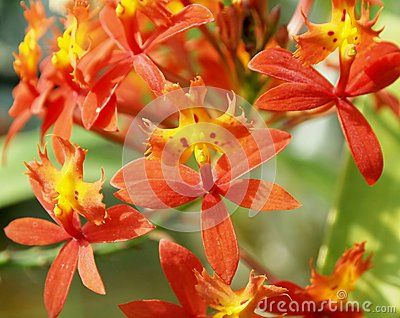 Some orange orchid in a garden