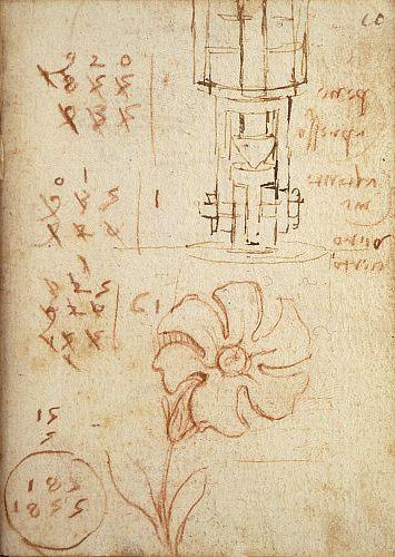 Sketches of flower and machine, by Leonardo da Vinci. Italy, 15th-16th century