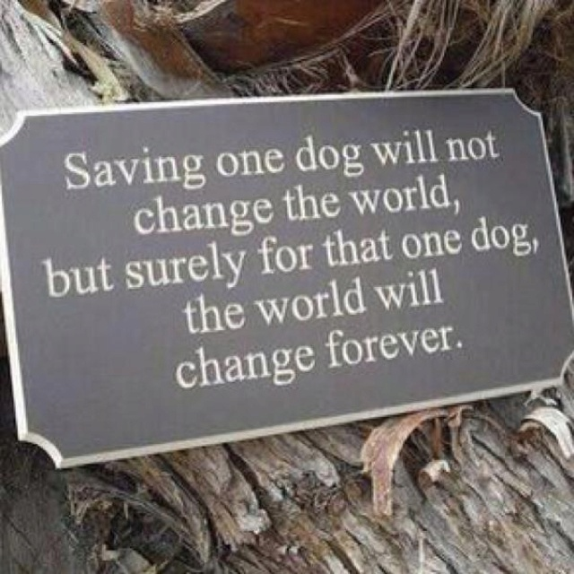 I love my Scooty! Memories Tablet, Rescue Dog, Dogs Quotes, Adoption A Dogs, Pets, So True,  Plaque, Shelters Dogs, Animal