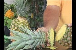 How to Grow Pineapple Plants from Pineapple Tops | eHow
