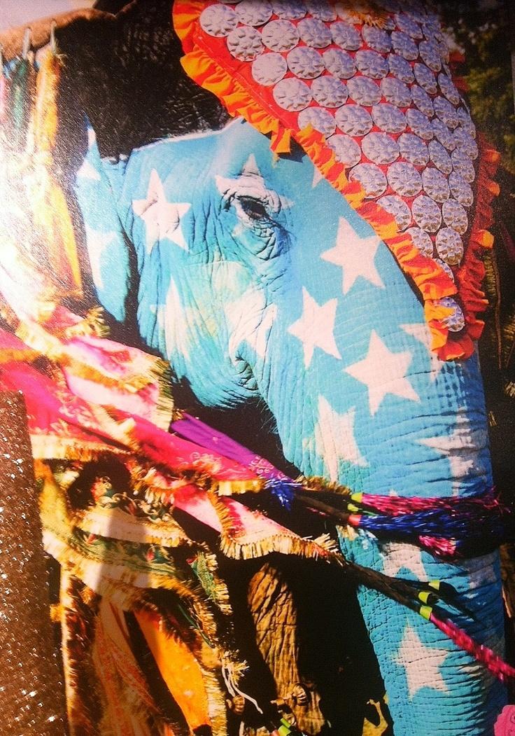 See the Elephant Festival of Jaipur, Rajasthan, India
