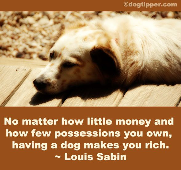 After paying bills today, this quote seemed especially appropriate!: Def Feelings, Dogs Quotes, Good Quotes, Rocks Stars, Animal Pet, Dogs Rules, Fur Baby, True Stories, Dogs Love