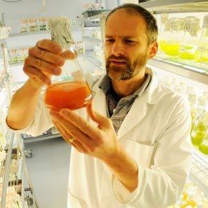 Ученые нашли растение, которое за 16 часов убивает 98% раковых клеток