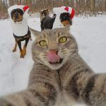 Lucu, Ini Dia Kucing Paling Narsis Sedunia