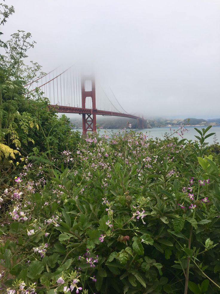 San Francisco Fog Map Live%0A San Francisco  summer style  foggy  San Francisco summer  Golden Gate  Bridge