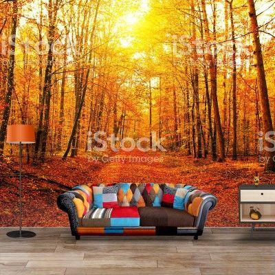 Fotobehang Bos in herfstkleuren | Maak het jezelf eenvoudig en bestel fotobehang voorzien van een lijmlaag bij YouPri om zo gemakkelijk jouw woonruimte een nieuwe stijl te geven. Voor het behangen heb je alleen water nodig!   #behang #fotobehang #print #opdruk #afbeelding #diy #behangen #herfst #zon #bos #wood #fall #sunrise #wallpaper #homedeco #room #inspiration