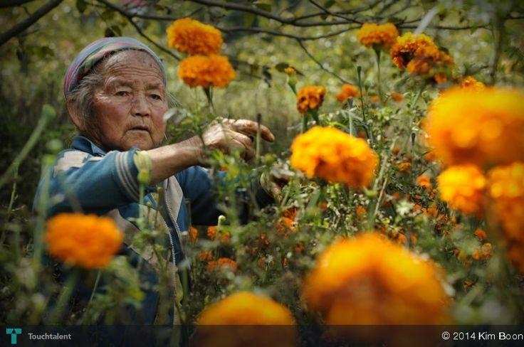 Chrysanthemum Old Lady #Creative #Art #Photography @touchtalent.com