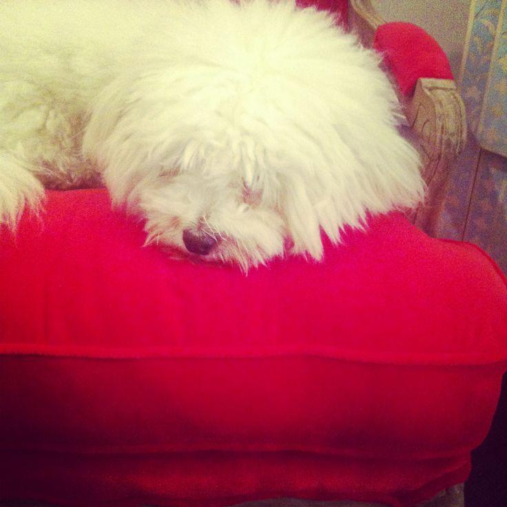 The charming company dog MOLLYSHOME.COM