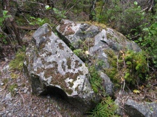 Split Rock on Black Hill Walk at Lake Rotoiti