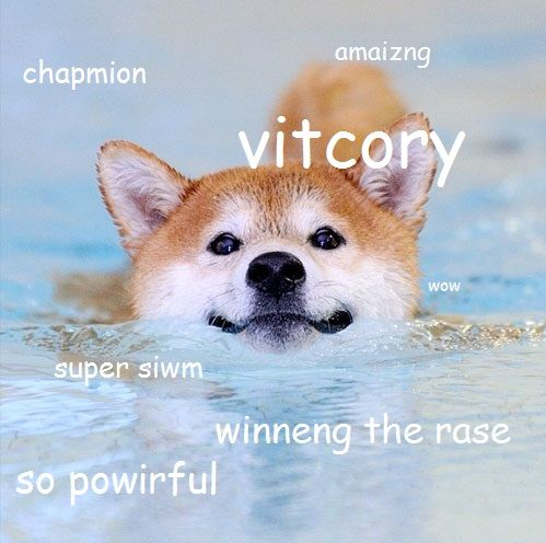 227 best Doge Meme Dog Memes images on Pinterest | Funny pics, Funny stuff and Doge meme