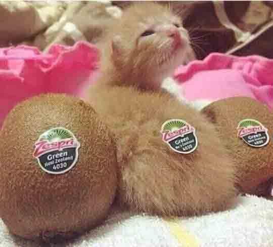 Zespry Or Kitten? ;) saturdayfun