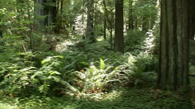 stock-footage-forest-sights-of-fern-and-shrubs.jpg (400×224)
