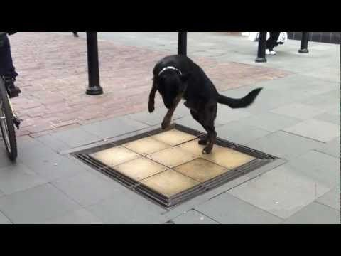 Dog Dancing on Chimes - YouTube