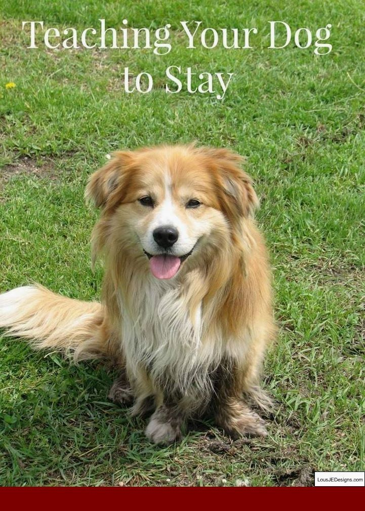 Best Method To Potty Train A Dog And Pics Of Tips To Teach Your