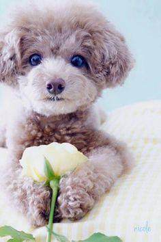 Cute flower lover #dog