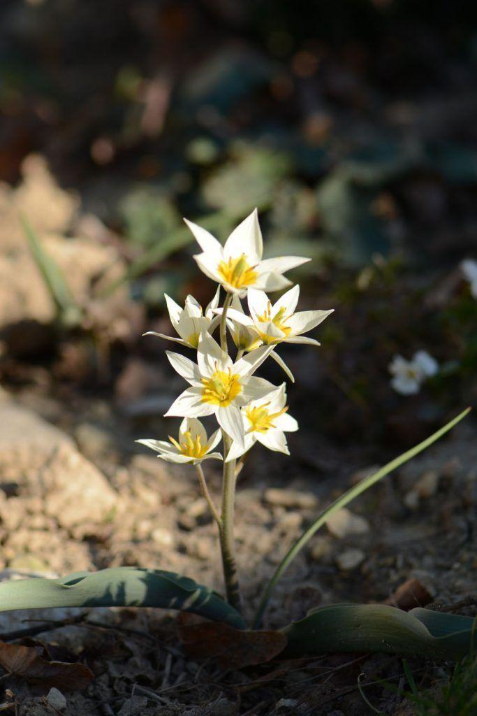 32 best Jardin images on Pinterest Gardening, Plants and Agriculture - Ou Trouver De La Terre De Jardin