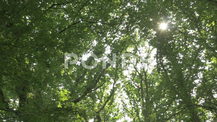 4K Panning Shot Trees In Forest Sunlight Lens Flare Low Angle - Stock Footage | by RyanJonesFilms