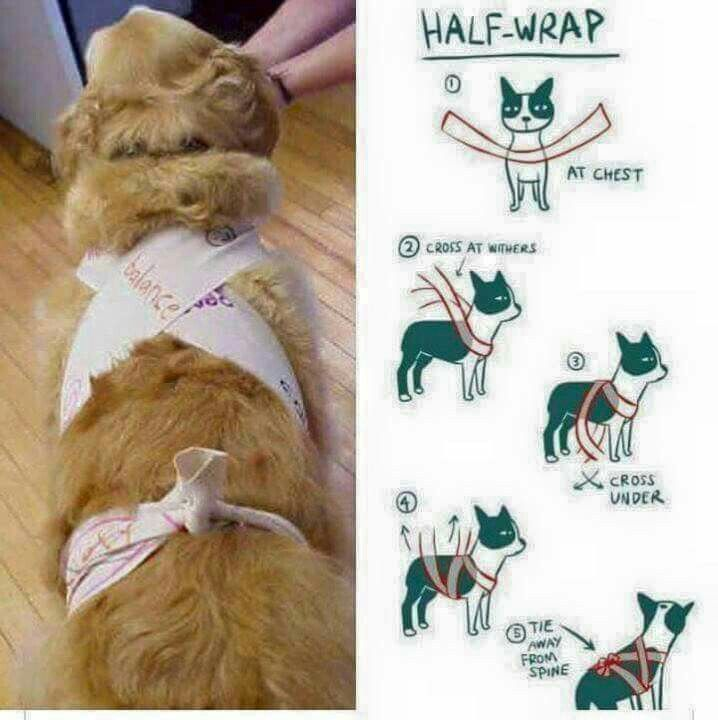 Thunder wrap for dogs this July 4th. For dogs afraid of fireworks you can use an ace bandage to make a calming thunder shirt.