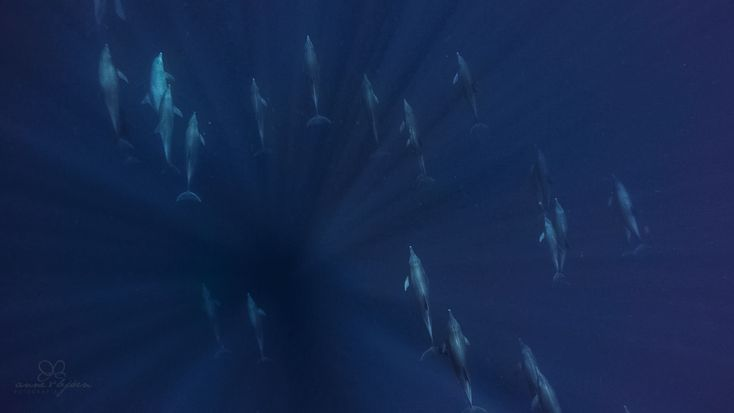 Zanzibar, dolphins, diving
