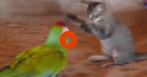 Cats scared of mice and birds #Funny#Cute#Birds#Cats#Adorable#Animals