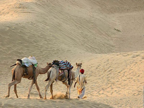 rajasthan culture - Google Search