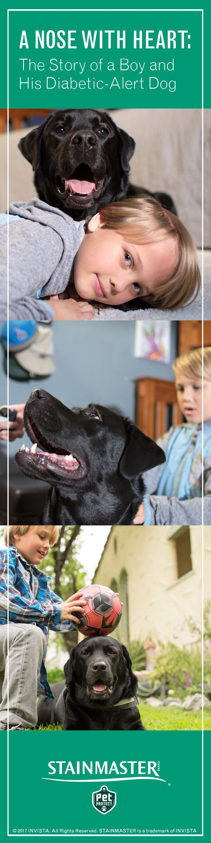 Luke suffers from Type 1 diabetes, but service dog Jedi is there night and day to monitor Luke's sugar levels—and to be his favorite playmate. Follow the story of this diabetic-alert dog.