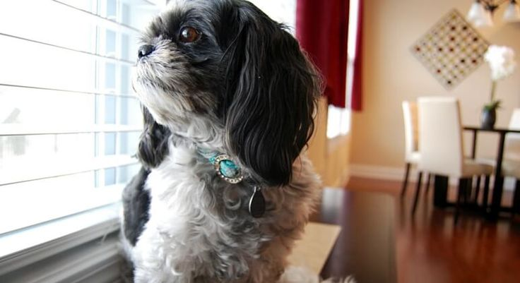 Natural Ways To Calm Dogs Anxiety