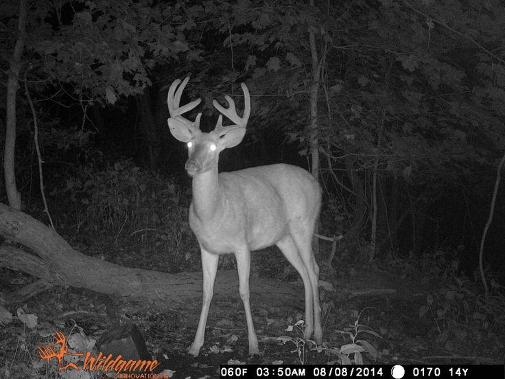 Deer cam Allegheny County PA Hunting season, Allegheny