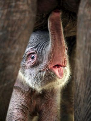 LOVE elephants and how precious is this little one?