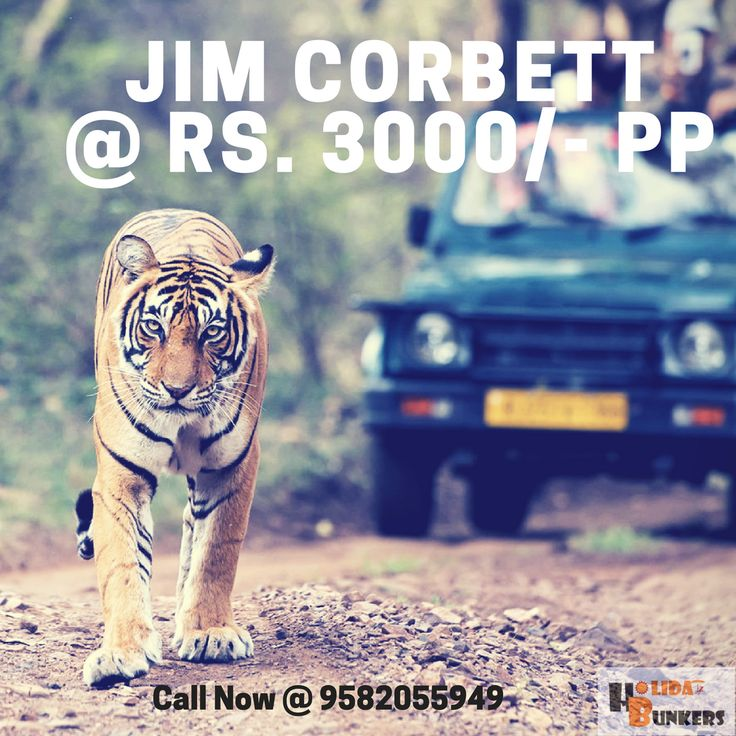 * Deal of the night*   JIM CORBETT @ Rs. 3000/- PP  INCLUSIONS:-  * Round Trip Volvo from Delhi-Corbett-Delhi * 1N Stay in a 3-4 Star Resort with Breakfast * Transfer to hotel and back.  * Jungle Safari complimentary in case of 6  traveling together.   Deal Valid for next 24 hours only. Hurry Up and Call Now @ 9582055949.  #Jimcorbett #Corbett #Nature #Wildlife #Weekend #Weekendgetaway #Vacationneardelhi #Vacation #Uttarakhand #besttravelpackage #besttraveloption.