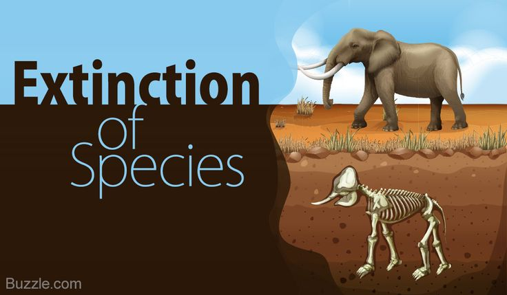 How do Humans Affect the Environment - Extinction of Species