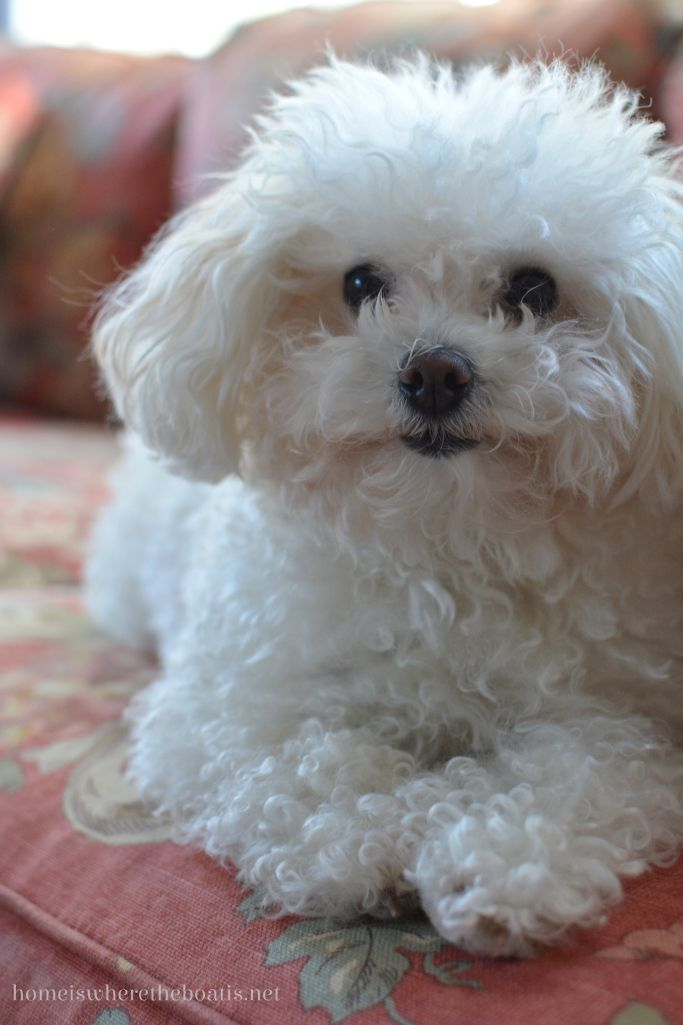 White Dog Therapy, Maddie | homeiswheretheboatis.net