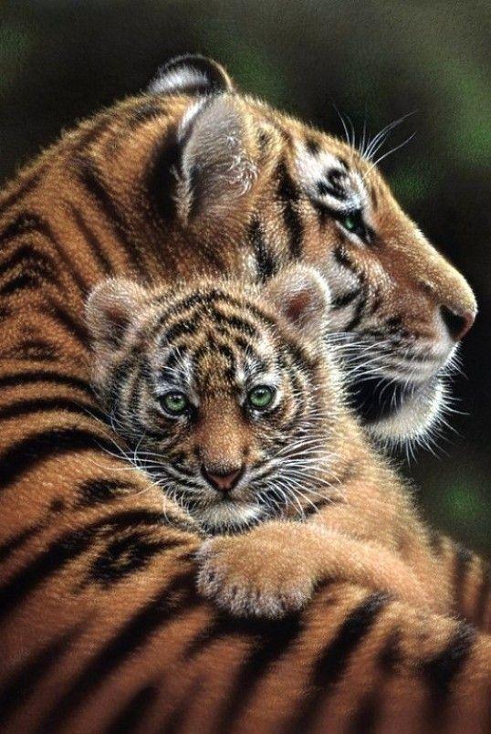 Картинки для обоих с животными телефон