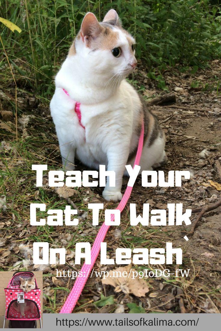 Teaching A Cat To Walk On A Leash Cat Training Cat Leash Cat Care