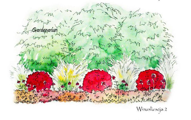 To tu... - strona 68 - Forum ogrodnicze - Ogrodowisko