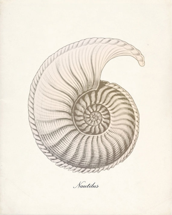 Nautilus Shell is a symbol for the inner beauty of nature, a symbol of life and internal harmony. The chambers of the nautilus shell are symbolic of the stages each individual passes through life. The spiral itself is a symbol of creation, movement, fluidity and evolution. It reveals the cyclical nature of life and the relationship between unity and multiplicity.
