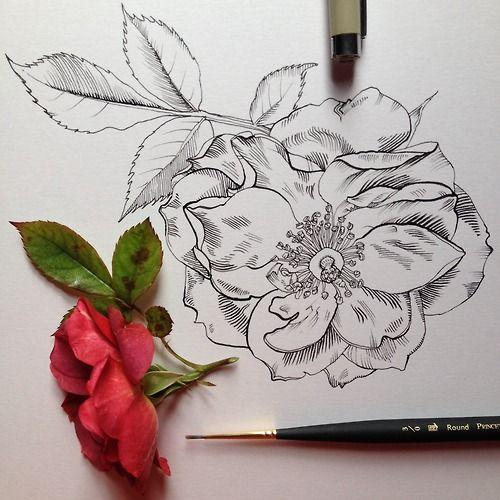 above line drawing of flower / tumblr. Noel Badges Pugh   drawing in progress