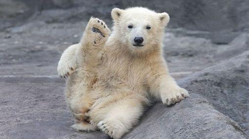 oso - Buscar con Google