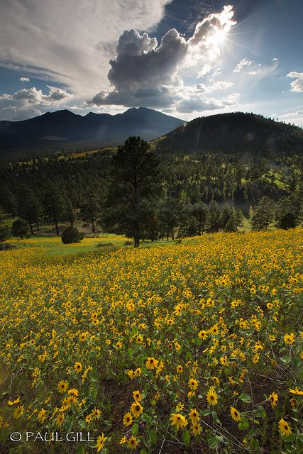 103 best images about Oh how I miss beautiful Arizona on Pinterest