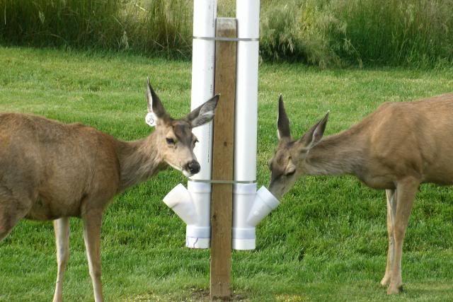 pvc pipe diy projects   Deer Feeder Homemade Pvc Pipe http://www.predatormastersforums.com ...