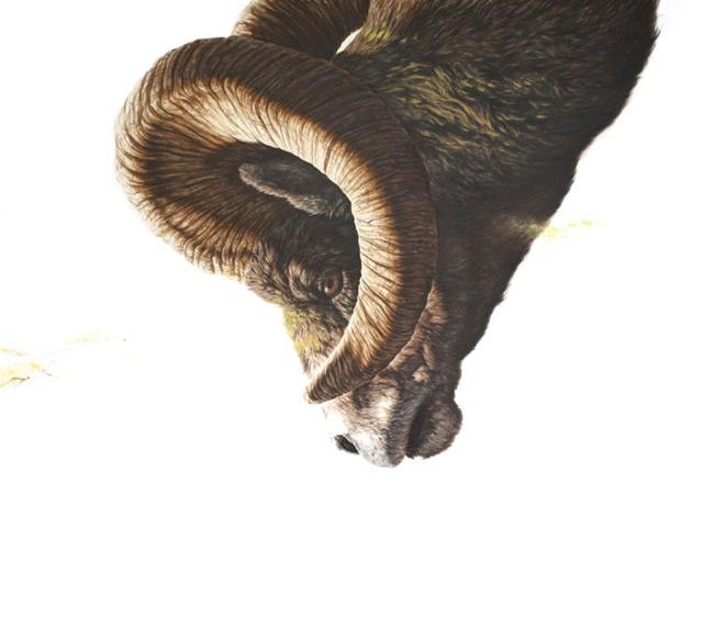 George Boorujy: Animals Paintings 1, Illustrations, Paper, Art, 2011, Ink Drawings, Ink Paintings