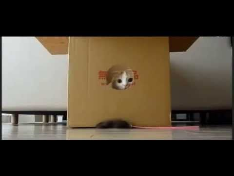 คลิป น้องแมวน่ารักอาศัยอยู่ในกล่อง คลิปแมวน่ารักๆ น้องแมวหาบ้าน คลิปตลกน้องแมวน่ารัก  https://www.facebook.com/CatDog2STORY