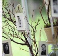 DIY Memory tree for 50th wedding anniversary.