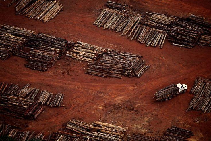 A view of illegal logging in sawmill area in Rondon do Pará, Pará, Brazil. November 2011. Rodrigo Baleia