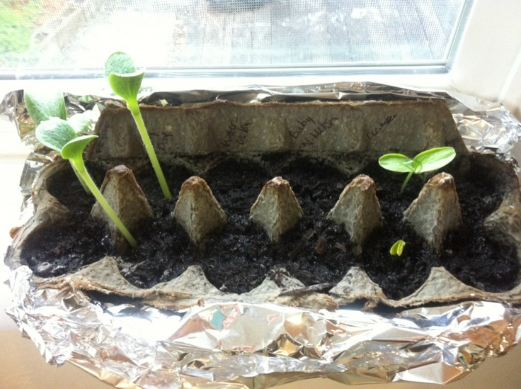 Start seeds in an egg carton and they can be planted directly into the ground. Line the lid with foil to waterproof it! Write what you planted in each spot on the cardboard.