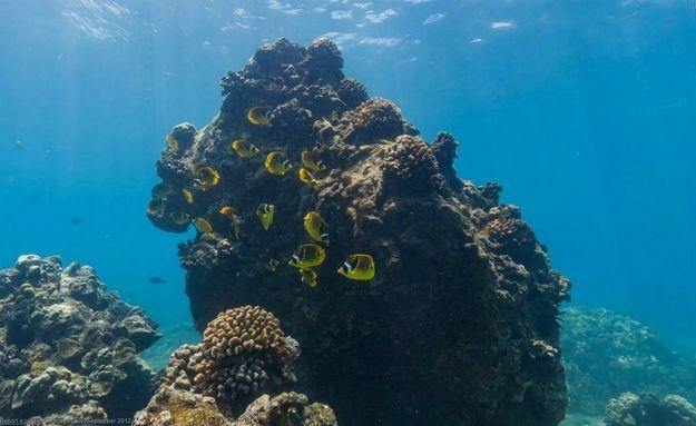 O #mar havaiano também foi fotografado pelo gigante das buscas: http://abr.io/5CYC