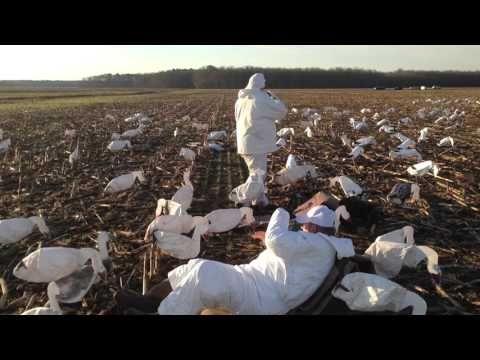 Goose Hunting   Call JOE: 410-603-1400