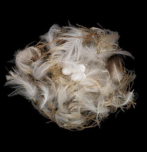 Riparia riparia (Sand Martin)  Bird Nest by Sharon Beals #Bird_Nest #Sharon_Beals