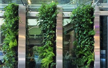 Green wall at Crowne plaza in Auckland.