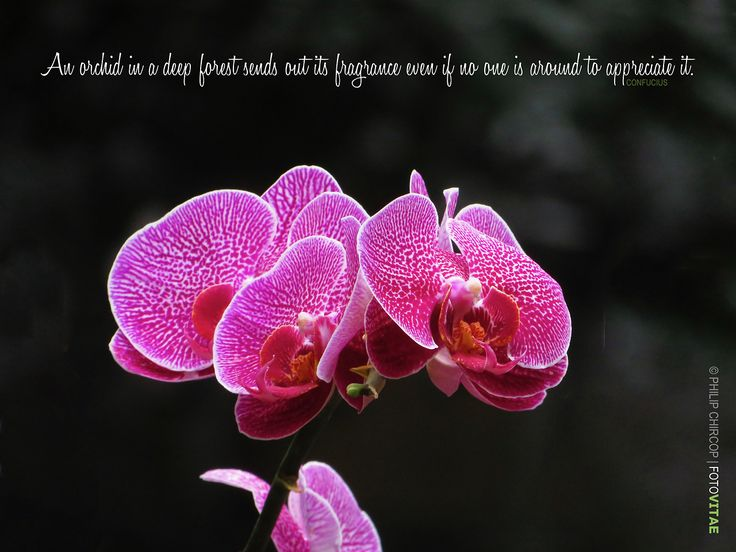 """LIFE AT EYE-LEVEL I Returning to the Jesuit community in Macau today, an orchid brightened my day … and taught me a lesson: """"An orchid in a deep forest"""", it has been said, """"sends out its fragrance..."""